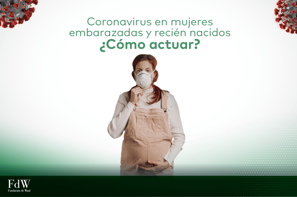 Coronavirus: lo que las madres deben saber